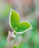 Young tree leaves in spring Royalty Free Stock Photos