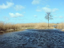 Young tree near water, Lithuania Royalty Free Stock Photos