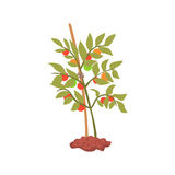 Young tree plant in the ground cartoon vector Illustration Royalty Free Stock Image