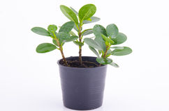 Young tree in plant Royalty Free Stock Images