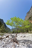 Young tree within the Samaria Gorge Stock Photo