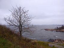 Young tree by the sea shore. Near Helsinki, Suomenlinna, Finland Royalty Free Stock Images