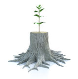 Young tree seedling grow from old stump Stock Photo