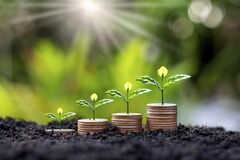 A young tree that sits on a pile of coins and grows on fertile soil.Ideas for saving money.