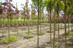 Young trees in the garden shop royalty free stock photo