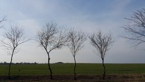 Young trees grow along the field Stock Photos