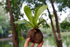 Young trees growing. On hand stock photo