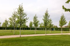 Young trees in the park. City park with young trees, lawn and hedgerow stock photography