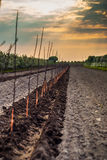 Young trees in a raw. Planted apple trees in orchard Stock Photo