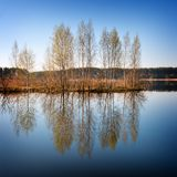 Young trees are reflected in lake water. Young trees of a birch are reflected in lake water in the spring Royalty Free Stock Photo