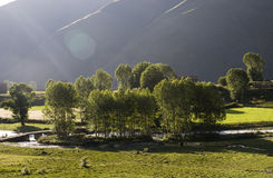 Young trees under sun light. Young trees under sun light in early morning near river Royalty Free Stock Photography