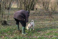A young truffle dog in a hazel grove of the Langhe, Piedmony - I. A young truffles dog is looking for truffle in a hazel grove of the Langhe, Piedmony - Italy stock images