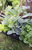Young vegetable plants on the garden Stock Images