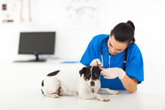 Vet examining dog Stock Photography