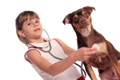 Young vet in training listens to her young patient. Young girls listens through her stethoscope to hear her dogs heart Royalty Free Stock Images