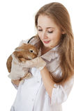 Young veterinarian doctor with pet brown rabbit. Stock Images