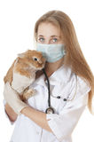 Young veterinarian doctor with pet brown rabbit. Stock Photo