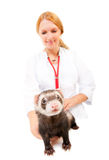 Young veterinarian examines a patient ferret Stock Photo