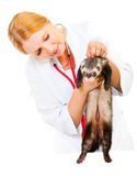 Young veterinarian examines a patient ferret Royalty Free Stock Photo