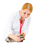 Young veterinarian examines a patient ferret Royalty Free Stock Images