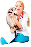 Young veterinarian examines a patient ferret Stock Photos