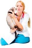 Young veterinarian examines a patient ferret Stock Photos
