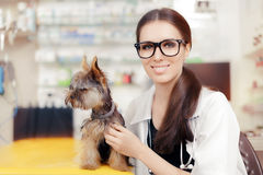 Young Veterinarian Female Doctor with Cute Dog Royalty Free Stock Images