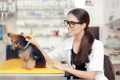 Young Veterinarian Female Doctor with Cute Dog Stock Image