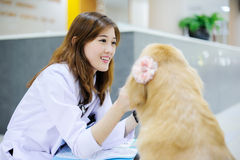 Young veterinarian at hospital Royalty Free Stock Photography