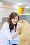 Young veterinarian at hospital Stock Image