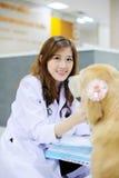 Young veterinarian at hospital Stock Photography