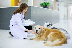 Young veterinarian at hospital Stock Images