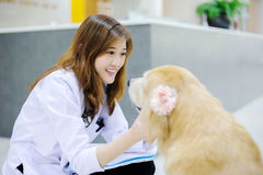 Young veterinarian at hospital Royalty Free Stock Images