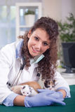 Young Veterinarian play with four beautiful little a kitten Stock Images