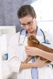 Young veterinary with rabbit Royalty Free Stock Photography