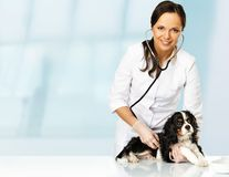 Young veterinary with spaniel Royalty Free Stock Photography
