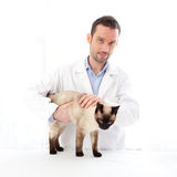 Young veterinary surgeon examining a siamese cat Stock Photos