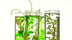 Young vine shoots in test tubes stock video footage