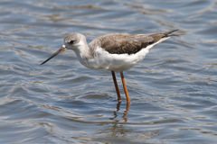 Young wading bird Stock Photos