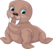 Young Walrus. Image young walrus on a white background Royalty Free Stock Photos