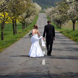 Young wedding couple Royalty Free Stock Photo