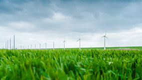 Young wheat blowing in the wind during a spring drum. a wind far. Young wheat blowing in the wind during a spring drum. In the background windmills spinning in Stock Photography