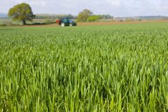 Young wheat crop with tractor in background Royalty Free Stock Photography