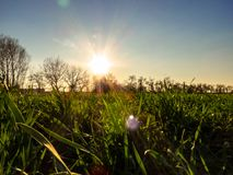 Young wheat field in spring stock photography