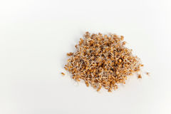 Young wheat sprouts in a glass container  on a white bac. Kground, spring time Stock Photos