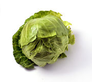 Young white cabbage. On white background royalty free stock photos