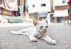 Young white cat with blue eyes on the street Royalty Free Stock Photo