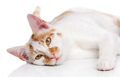 Young white and red cat Stock Photo