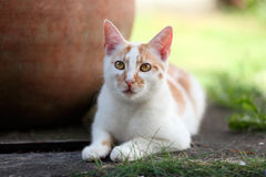 Young white and red cat laying down in the garden Stock Images