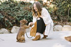 A Young White Woman Shakes Hands with Her Boston Terrier Pet Dog Smiles Happy stock photos
